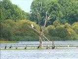 Réserve Naturelle Etang des Landes à Lussat dans la Creuse