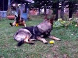 Maya visite Lola, chiens végétariens