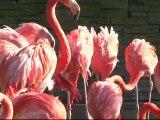 Évolution des espèces et biodiversité, Muséum national d'Histoire naturelle, itv de Robert Barbault Directeur du département Écologie et Gestion de la biodiversité
