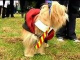 HALLOWEEN HOWLERS: Dog fancy dress contest