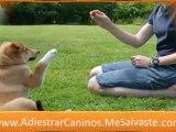 Entrenamiento perros - adiestramiento de perros
