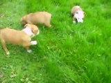 Vidéo du 04.11.2011 des 3 autres fifilles