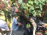 Vins du Sud-Ouest le vin noir dans la cour des grands