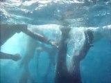 Recep ASLAN Zıpkınla Balık Avı Kursu 30 Ekim 2011