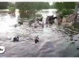 Zapping décalé : Une fondation pour les chiens victimes des inondations à Bangkok