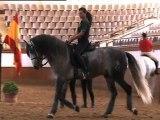 EXTRAIT - Quand dansent les chevaux andalous - Equidia Life