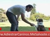 Adiestramiento Canino - Como Educar A Tu Perro - Adiestramiento Perros