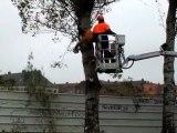 Cambrai: 60 arbres dangereux vont être abattus