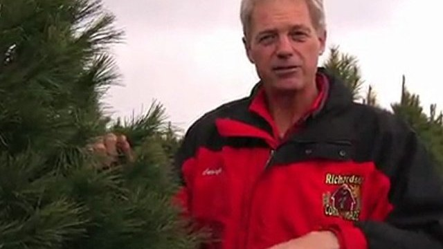 Quick Tip: Real Christmas Trees Vs. Artifical Trees