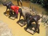 RDC : les diamants sont éternels