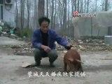 Le cochon à deux pattes en Chine