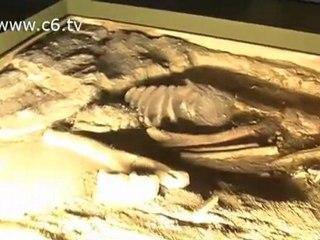 Alla scoperta delle origini con la mostra 'Homo Sapiens'