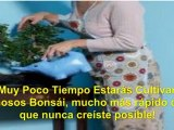 como hacer un bonsai - mini bonsai - ginkgo bonsai