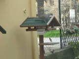REPAS DU 13 DECEMBRE 2011 (oiseaux)