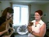 Reportage  2011 Un amour de chien  présente le Russkiy Toy