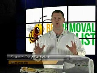 How to Kill Bees
