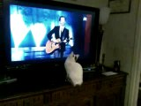 une chatte,fan de Gad el Maleh et jamel