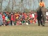 Los elefantes también saben jugar fútbol
