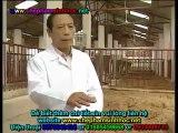 Đệm lót sinh thái - đệm lót lên men - đệm lót sinh học balasa trong chăn nuôi heo
