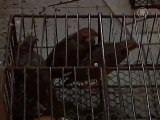 Officials Say China Bird Flu Death Not From Human Transmission