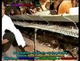 Tác dụng của chế phẩm men vi sinh NN1 - Men vi sinh NN1 cho chăn nuôi heo, chăn nuôi gà