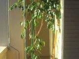 Appartement - Achat Vente Avignon  - N° BB 2733- ABD IMMO