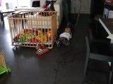MVI_4902 Lucas premier jour quatre pattes