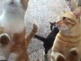 The cats are dancing at the door to get lunch leftovers