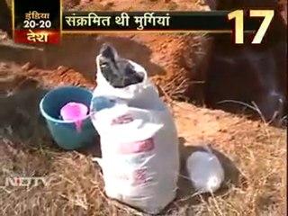 30 हजार संक्रमित मुर्गियां मारी गईं