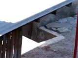 Un corbeau taquine deux chats en pleine bagarre