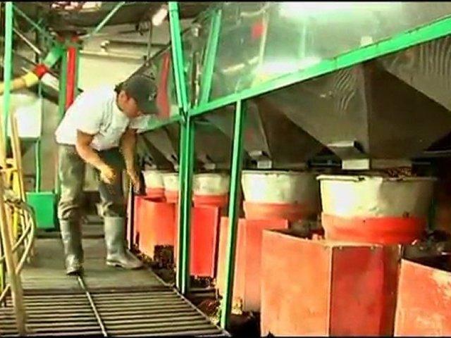 Colombia Coffee Exporters Coffee Company La Meseta | Excelso Coffee