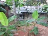 Trivandrum Real Estate :House and  Land  for Sale at Thirumala Kunnapuzha, Trivandrum
