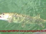Pêche aux bigbaits par Europeche34 au lac du Salagou, à la recherche de brochets records.