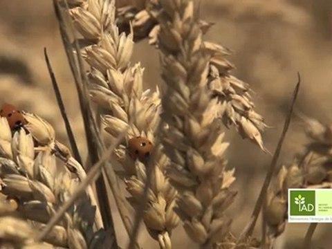 L'Agriculture durable au fil des saisons : Episode 2