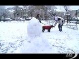 Forte nevicata a Torino, chiuse le scuole in città. Temperature sotto lo zero. Difficoltà alla viabilità