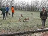 Brevet de chasse chien courant 30 Janvier 2012 dans les 2 sevres chez J.M LAIDET (le départ)