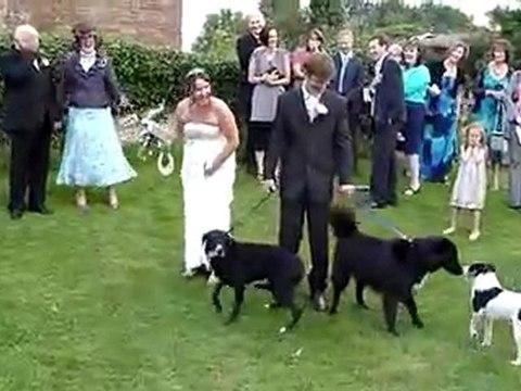 Hund ruiniert Hochzeitskleid