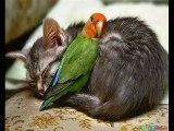 Cute Animals - Animaux Mignons !
