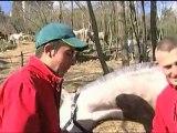 EXTRAIT - Jeunes chevaux, les parcours de l'excellence - Equidia Life