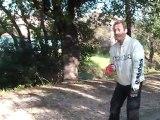 Les Bouledogues aussi peuvent faire chiens de traineau !!