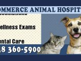 Commerce Township Veterinarian - Commerce Animal Hospital - Michigan