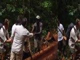 La plus grande Forêt du Monde: La Guyane - la forêt avec les boushiningués