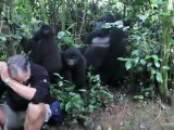 Touched by a Wild Mountain Gorilla in bwindi impenetrable forest (www.newuganda.com)