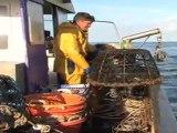 Pêche responsable et durable : la pêche aux bulots et aux grands crustacés en Normandie du côté de Granville