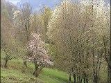 Pyrénées merisiers en fleurs arbres rouille jaunes et autres