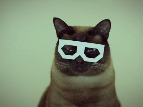 Hipster Cat Dubstep