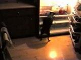 The midnight pizza burgler
