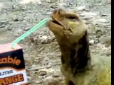Lizard Drinks Orange Juice!!!