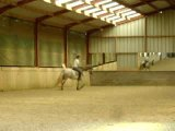 video jamou trot cercle croit
