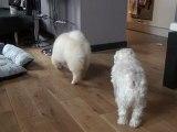 Poppers, Ptit Biscuit et Nikita - Nos 3 chiens